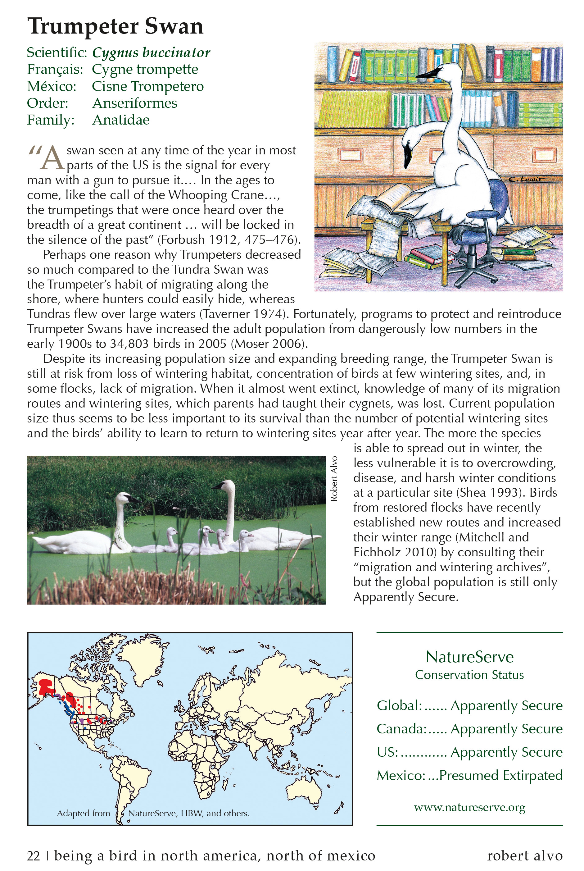 Sample Page for the Trumpeter Swan